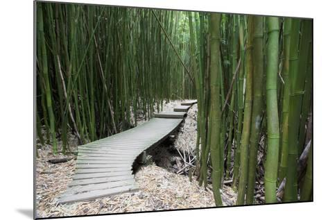Hawaii, Maui, Kipahulu, Haleakala National Park, Trail Through Bamboo Forest on the Pipiwai Trail-Design Pics Inc-Mounted Photographic Print