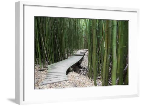Hawaii, Maui, Kipahulu, Haleakala National Park, Trail Through Bamboo Forest on the Pipiwai Trail-Design Pics Inc-Framed Art Print
