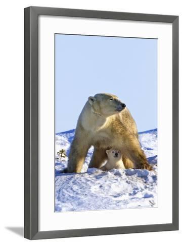 A Mother Polar Bear (Ursus Maritimus) with Her Cub in Wapusk National Park; Churchill-Design Pics Inc-Framed Art Print