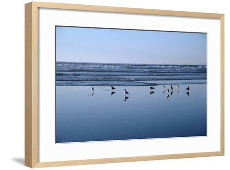Seagulls Standing on the Shore as the Waves Roll In-Design Pics Inc-Framed Art Print