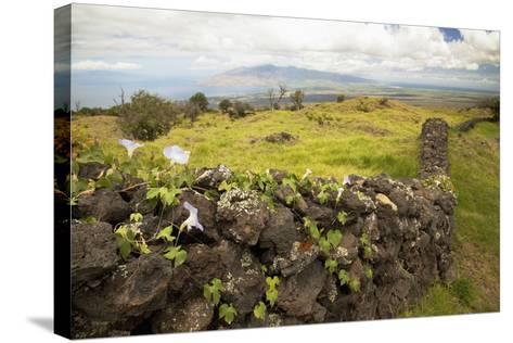 Hawaii, Maui, Kula, a Stone Wall Lines a Country Road-Design Pics Inc-Stretched Canvas Print