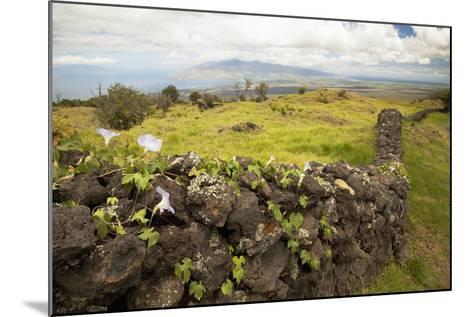 Hawaii, Maui, Kula, a Stone Wall Lines a Country Road-Design Pics Inc-Mounted Photographic Print