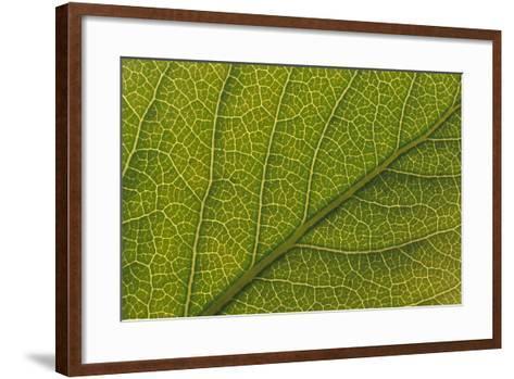 Studio Closeup Green Cottonwood Leaf Pattern-Design Pics Inc-Framed Art Print