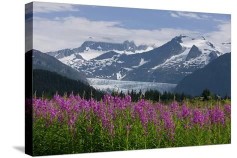 Scenic View of Mendenhall Glacier with Fireweed in the Foreground-Design Pics Inc-Stretched Canvas Print