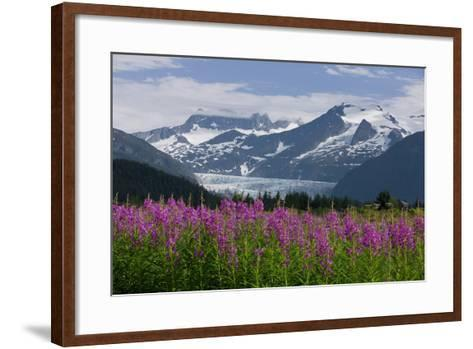 Scenic View of Mendenhall Glacier with Fireweed in the Foreground-Design Pics Inc-Framed Art Print