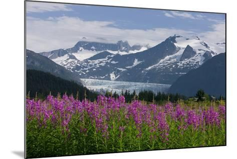 Scenic View of Mendenhall Glacier with Fireweed in the Foreground-Design Pics Inc-Mounted Photographic Print