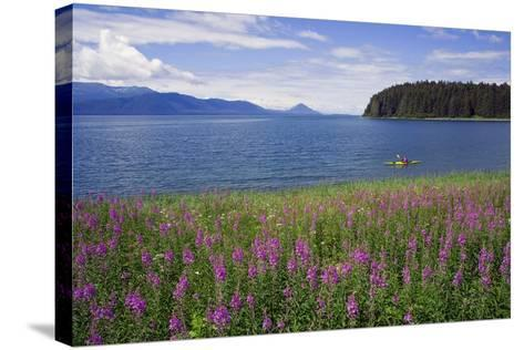 Man Sea Kayaking Along Shoreline of Admiralty Island with Fireweed Southeast Ak Inside Passage Summ-Design Pics Inc-Stretched Canvas Print