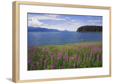 Man Sea Kayaking Along Shoreline of Admiralty Island with Fireweed Southeast Ak Inside Passage Summ-Design Pics Inc-Framed Art Print