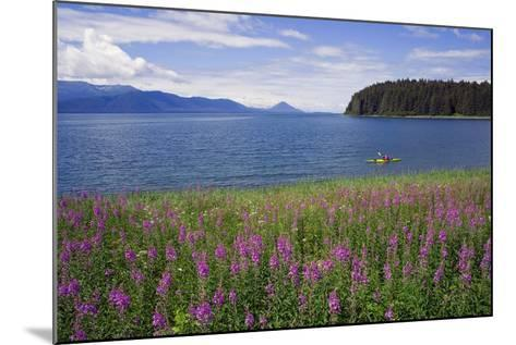 Man Sea Kayaking Along Shoreline of Admiralty Island with Fireweed Southeast Ak Inside Passage Summ-Design Pics Inc-Mounted Photographic Print