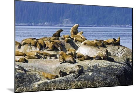 Steller Sea Lions on Haulout South Marble Island Glacier Bay National Park Southeast Alaska Summer-Design Pics Inc-Mounted Photographic Print