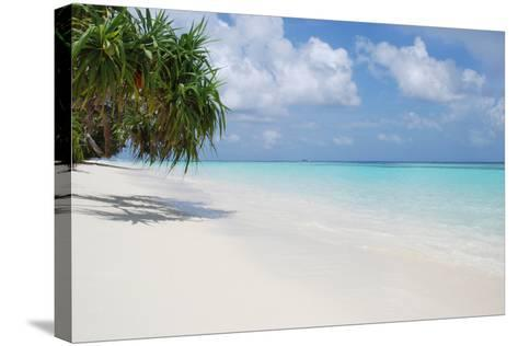 Beach with Palm Trees-Design Pics Inc-Stretched Canvas Print