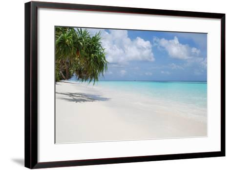 Beach with Palm Trees-Design Pics Inc-Framed Art Print