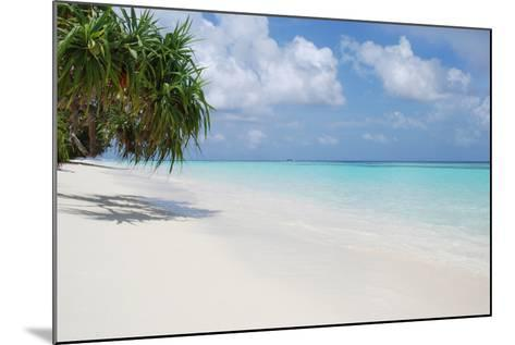 Beach with Palm Trees-Design Pics Inc-Mounted Photographic Print