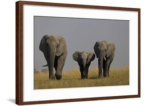 Elephant Herd Walking in Northern Botswana-Beverly Joubert-Framed Art Print