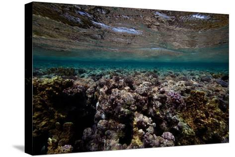 Coral and Other Marine Life in a Fringe Reef on Ant Atoll-Luis Lamar-Stretched Canvas Print