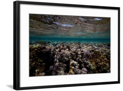 Coral and Other Marine Life in a Fringe Reef on Ant Atoll-Luis Lamar-Framed Art Print