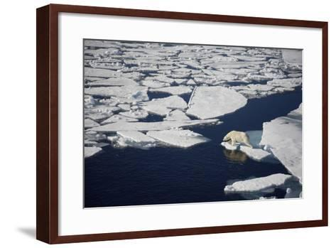 Polar Bear on Melting Sea Ice, High Angle View from Cruise Ship; Svalbard, Norway-Design Pics Inc-Framed Art Print