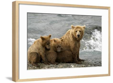 Mother Grizzly with 2nd Year Cubs by River Sw Ak Summer Mcneil State Game Sanctuary-Design Pics Inc-Framed Art Print