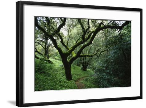 Mossy Trees on Devil's Gulch Trail in Samuel P. Taylor State Park-Rebecca Hale-Framed Art Print