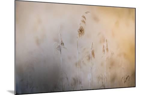 Close View of Grasses, Gap, France-Keith Ladzinski-Mounted Photographic Print