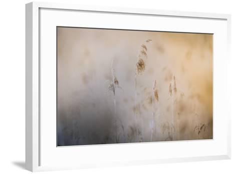 Close View of Grasses, Gap, France-Keith Ladzinski-Framed Art Print