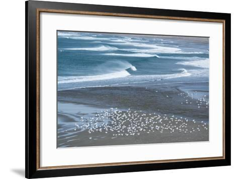 Gulls Rest on the Coastline of Stornetta Public Lands North of the Town of Point Arena-Michael Melford-Framed Art Print