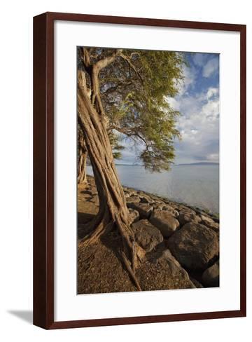 Hawaii, Maui, Kihei, a Kiawe Tree at Sunset-Design Pics Inc-Framed Art Print