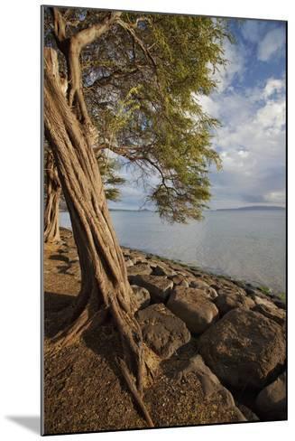 Hawaii, Maui, Kihei, a Kiawe Tree at Sunset-Design Pics Inc-Mounted Photographic Print