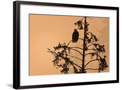 Silhouette of a Bald Eagle Perched on a Tree at Sunset in the Mist of the Tongass National Forest-Design Pics Inc-Framed Art Print