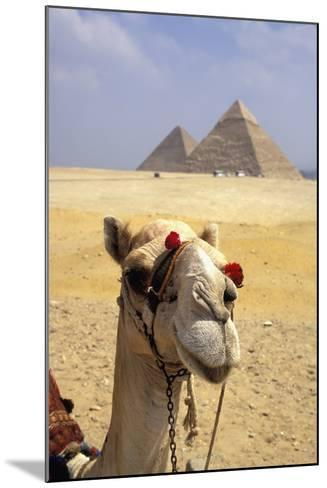 Close-Up on a Camel Looking at the Camera with Pyramids in the Background, Giza, Egypt; Giza, Egypt-Design Pics Inc-Mounted Photographic Print