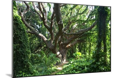 Hawaii, Maui, Honolua, a Tree Surrounded by Lush Green Vines-Design Pics Inc-Mounted Photographic Print