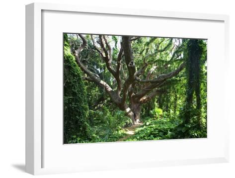 Hawaii, Maui, Honolua, a Tree Surrounded by Lush Green Vines-Design Pics Inc-Framed Art Print