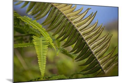Hawaii, Maui, Waihee, a Closeup of Green Fern with Seeds-Design Pics Inc-Mounted Photographic Print