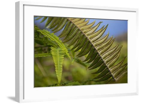 Hawaii, Maui, Waihee, a Closeup of Green Fern with Seeds-Design Pics Inc-Framed Art Print