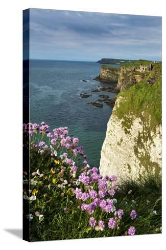 Sea Pinks at Dunluce Castle on the North Coast of Northern Ireland-Chris Hill-Stretched Canvas Print