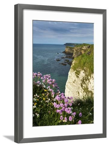 Sea Pinks at Dunluce Castle on the North Coast of Northern Ireland-Chris Hill-Framed Art Print