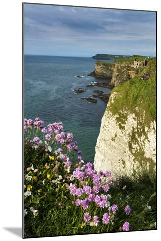 Sea Pinks at Dunluce Castle on the North Coast of Northern Ireland-Chris Hill-Mounted Photographic Print