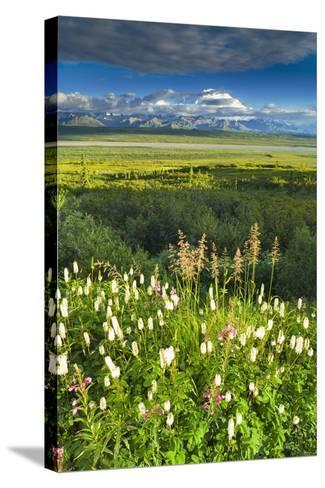 View of Mt Mckinley with Fireweed and Sitka Burnet Flowers-Design Pics Inc-Stretched Canvas Print