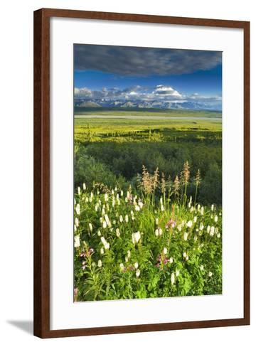 View of Mt Mckinley with Fireweed and Sitka Burnet Flowers-Design Pics Inc-Framed Art Print
