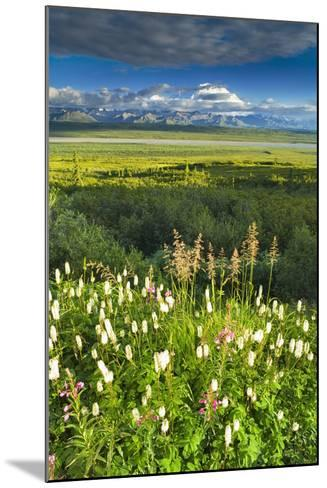 View of Mt Mckinley with Fireweed and Sitka Burnet Flowers-Design Pics Inc-Mounted Photographic Print