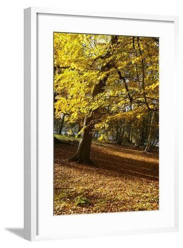 Yellow Leaves on Trees in Forest-Design Pics Inc-Framed Art Print