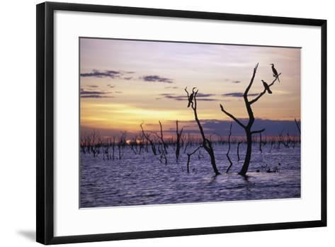 View of Lake Kariba at Sunset-Design Pics Inc-Framed Art Print