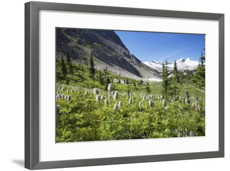 Mountain Meadow with Wildflowers and Glacier Mountains-Design Pics Inc-Framed Art Print