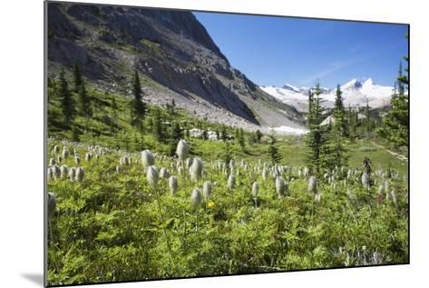 Mountain Meadow with Wildflowers and Glacier Mountains-Design Pics Inc-Mounted Photographic Print