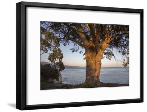 A Eucalyptus Tree Overlooking the Santa Barbara Channel-Macduff Everton-Framed Art Print