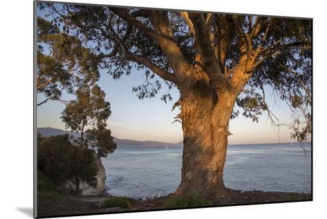 A Eucalyptus Tree Overlooking the Santa Barbara Channel-Macduff Everton-Mounted Photographic Print