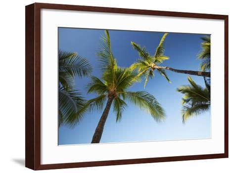 Hawaii, Lanai, Hulope Beach, Plam Trees from Below-Design Pics Inc-Framed Art Print