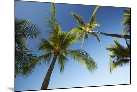 Hawaii, Lanai, Hulope Beach, Plam Trees from Below-Design Pics Inc-Mounted Photographic Print