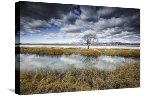 Lone Tree Reflected in Water Near Del Norte, Colorado-Keith Ladzinski-Stretched Canvas Print