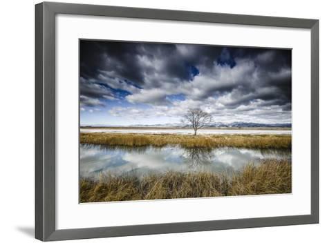 Lone Tree Reflected in Water Near Del Norte, Colorado-Keith Ladzinski-Framed Art Print